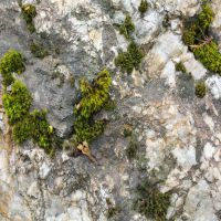 Stone Moss 6 by AngelEowyn