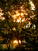 365 Day 10: Sunlight Thicket by The-Lost-Hope