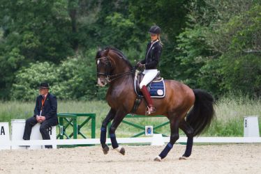 Lusitano Dressage Training Canter Pirouette Stock by LuDa-Stock