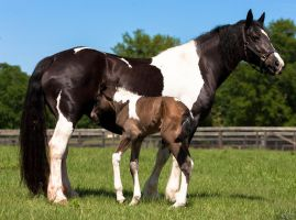 Sugar and New Baby by Deirdre-T