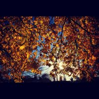 Golden Leaves of Autumn by Jasmine-M-Shaw
