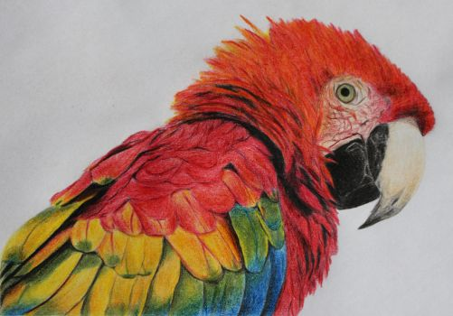 parrot by Andrea274