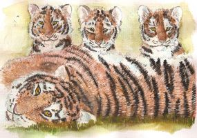 Tiger and cubs watercolour by Davuu