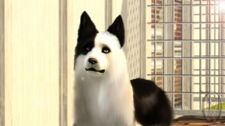 Sims 3 Pets- Shell by SpirityTheDragon