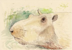 Speedsketching 3# Kvabebihyrax by Hyrotrioskjan