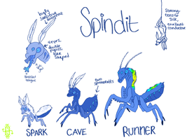Spindit Basic Guide (SEMI-OPEN SPECIES!) by Dual-Clock