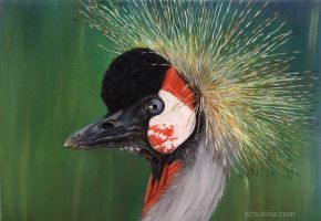 Grey Crowned Crane - oil by sschukina