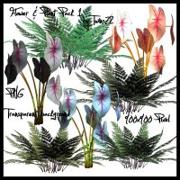 Stock Flower Plant Pack 1 by Twins72