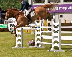 Jumping stock 40 by Kennelwood-Stock