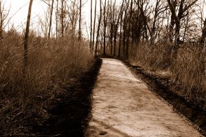 Just a path through the woods by SoulPictures