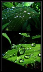 Droplets by the-liz-42