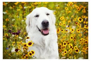 Flower dog by NewForestPhotography