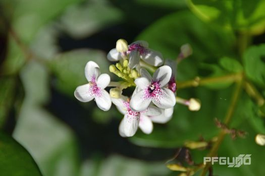 Flowers With Dotted Centres by pfgun0