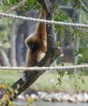 Spider Monkey 2 by Focus-Fire