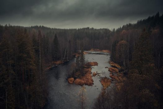 Autumn Forest by Eredel
