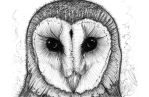 Barn Owl by GraphicDensity
