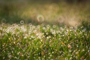 Circular grass by Dunadan-from-Bag-End