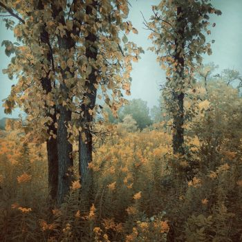 A September Song by intao
