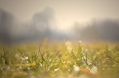 Light in grass by ThaliaNoldor