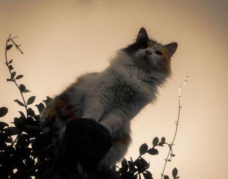 The Cat Rises. by Tomsp1138