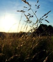 grassy sunset 2 by blackasmodeus