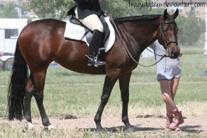 Quarter Horse Stock 68 by tragedyseen