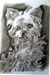 dog with pencil by tecnocida