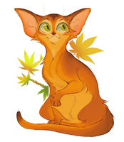 inb4 theyre japanese maple leaves not weed by miraclespout