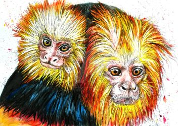 Tamarins by Adys-Creations
