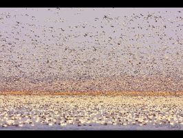 The Avian Army by FramedByNature
