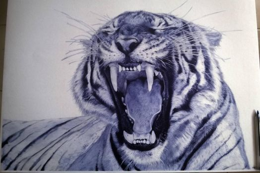 Tiger by tamster305