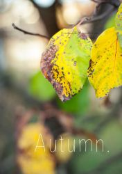 Autumn Leaves by melonemond