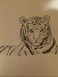 Tiger by Coraline12345