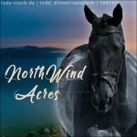 NorthWind Acres Avi by CloverHoofAcres