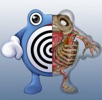 Poliwhirl Anatomy by Christopher-Stoll