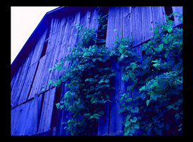 the old allen barn by tigertial8888
