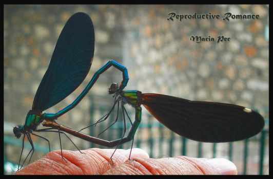 Reproductive Romance by mariaper