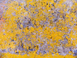 Yellow Concrete 4 by Artfans