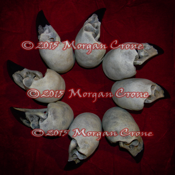 Ring of Crows by MorganCrone