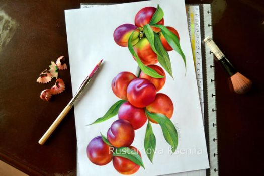 Nectarines in pencil by Rustamova