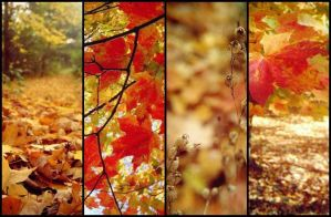 Fall by ram-photography