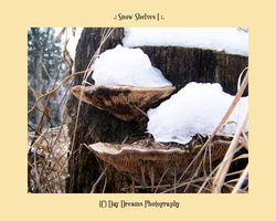 .:Snow Shelves:. by DayDreamsPhotography