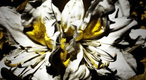 Brand New Eyes by ksouth