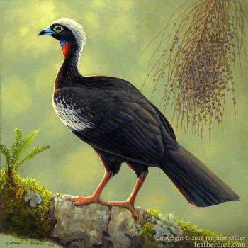 Black-Fronted Piping-Guan by Nambroth