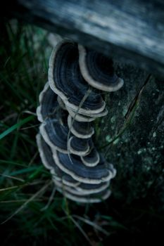Mushrooms by Sonnich