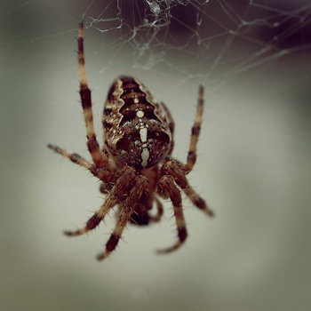 Spider by FeelinThis