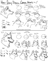 Canine heads step-by-step by TheShadowedGrim