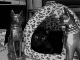 Egyptians Isis in black and white by cat55