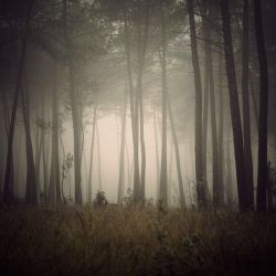 Foggy morning by julie-rc