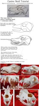Canine Skull Tutorial by TheKarelia